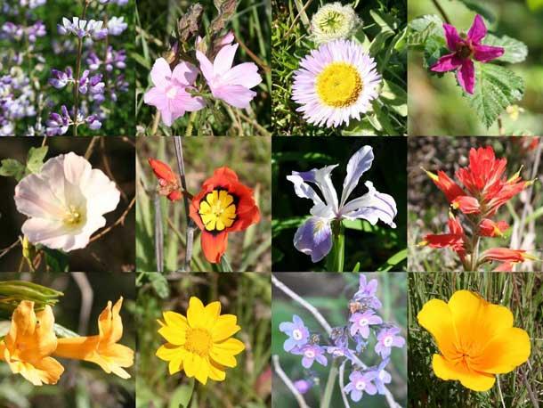 wildflowers_610_01.