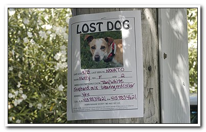 lostdogs_403