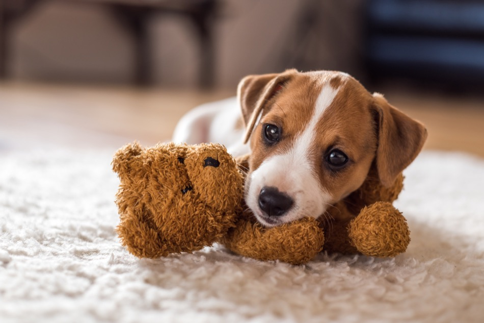What Should You Do to Sell Your Home With Pets?