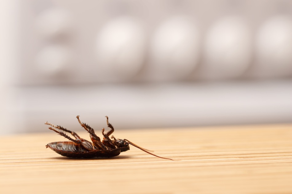 Signs of Common Pests