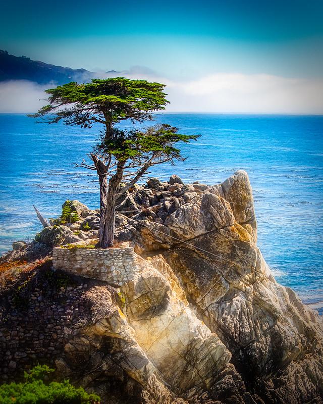 Favorite Hotspots in Pacific Grove California