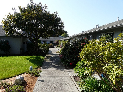 Alhambra Avenue Condos, Townhomes in Seabright, East Santa Cruz
