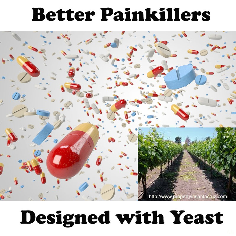 Carmel Valley people may have better painkillers