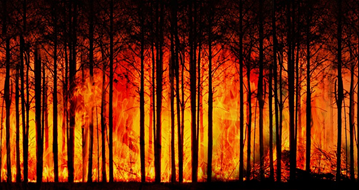 wildfire_california