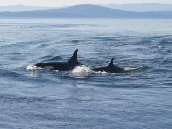 Tips for Washington State Whale Watching