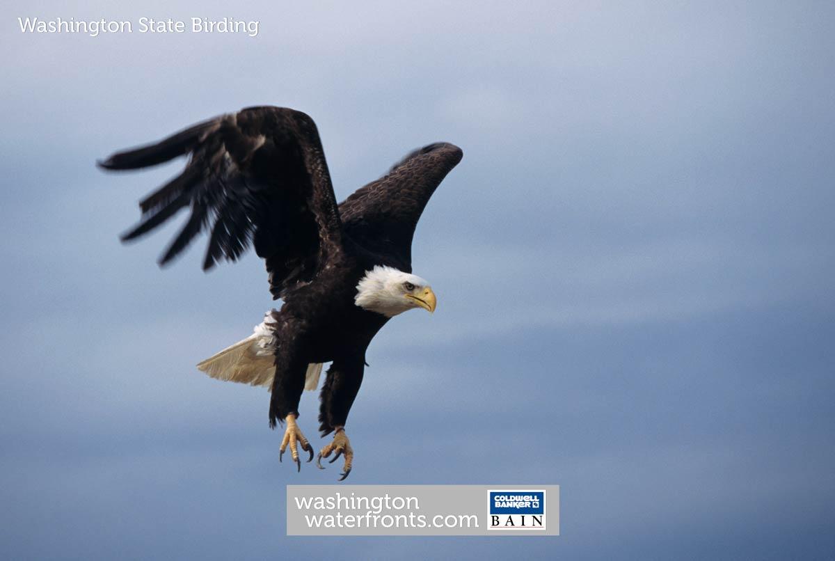 Washington State Birding