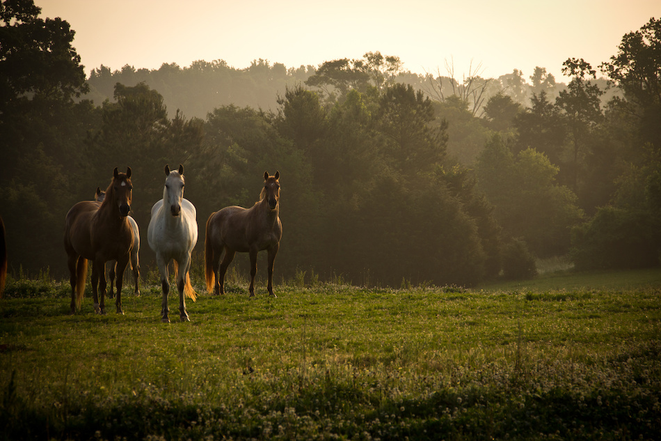 What to Know When Buying Land for Horses