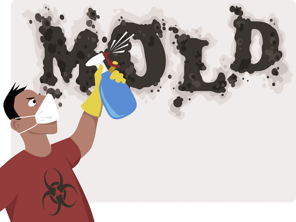 Dealing with Toxic Mold in the Home
