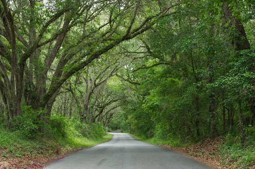Tallahassee Canopy Road