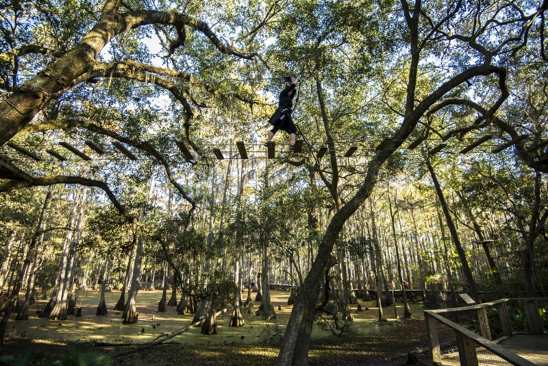 Zipline at the Tallahassee Museum