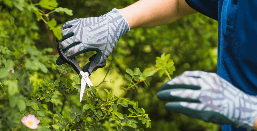 Spring Landscaping Tips for Edmonton Home Owners Pruning Image