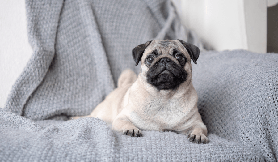 6 Tips for a Pet-Friendly Home Main Image