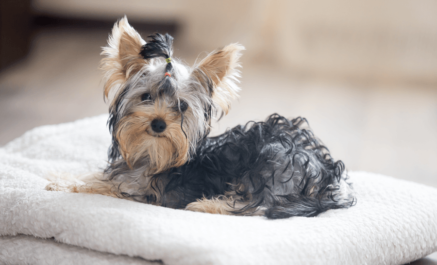 6 Tips for a Pet-Friendly Home Pet Bed Image