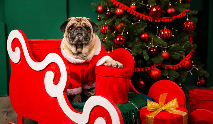 Pet Photos With Santa in Edmonton 2019 Main Image