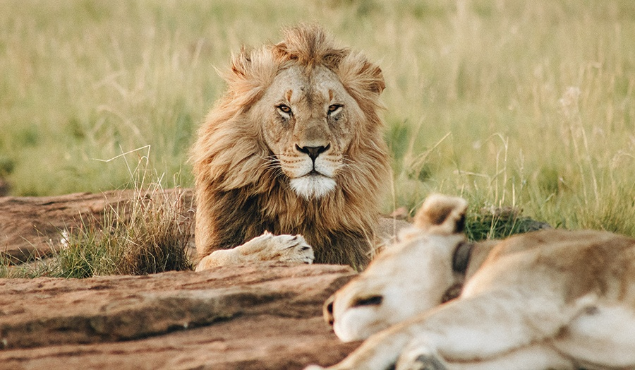 26 Must-See Virtual Tours From Around the World Lions Image