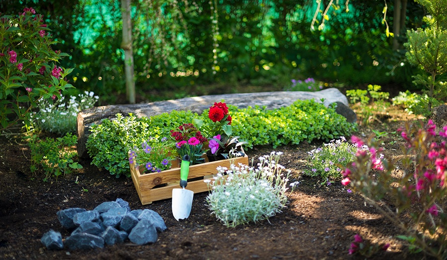 10 Simple Home Garden Hacks Everyone Should Know Main Image
