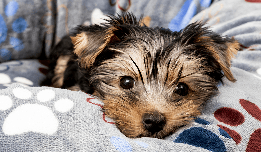 9 DIY Life Hacks Every Homeowner Should Know Puppy Image