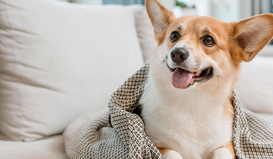 8 Tips For Relieving Doggy Boredom at Home Food Puzzle Image