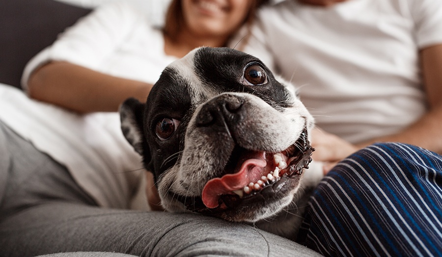 8 Tips For Relieving Doggy Boredom at Home Dog Relazing Image