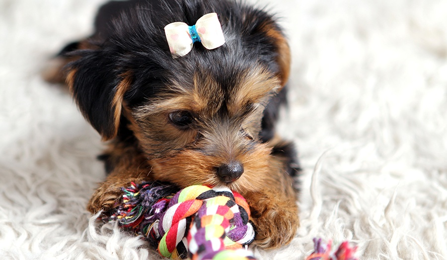 8 Tips For Relieving Doggy Boredom at Home Toys Image