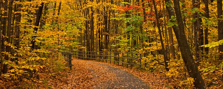 Westchester Walking Trails