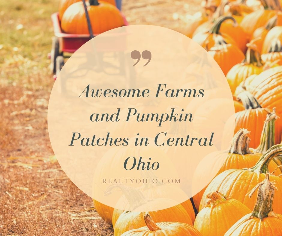 Awesome Farms and Pumpkin Patches in Central Ohio