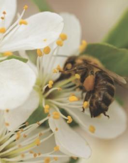 A bee in a garden