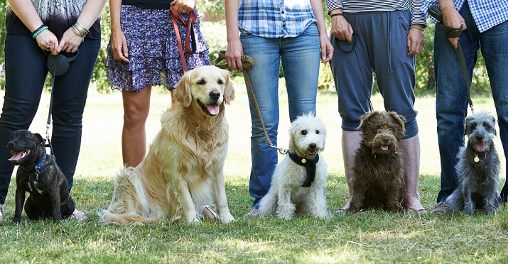 dogs and owners in group training class