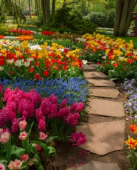 beautiful flower garden and stone path