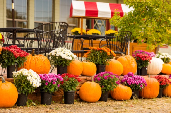 Pumpkins and mums make a lovely autumn focal point.