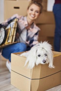 Sad dog adjusting to new home