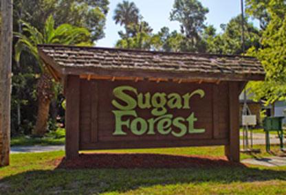 sugar forest