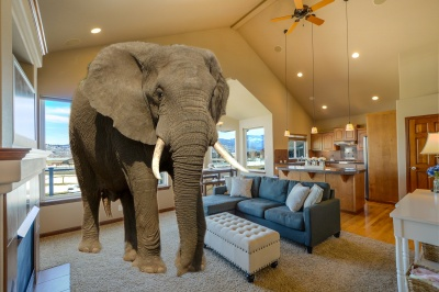 The Elephant in the Room...Appraisals!