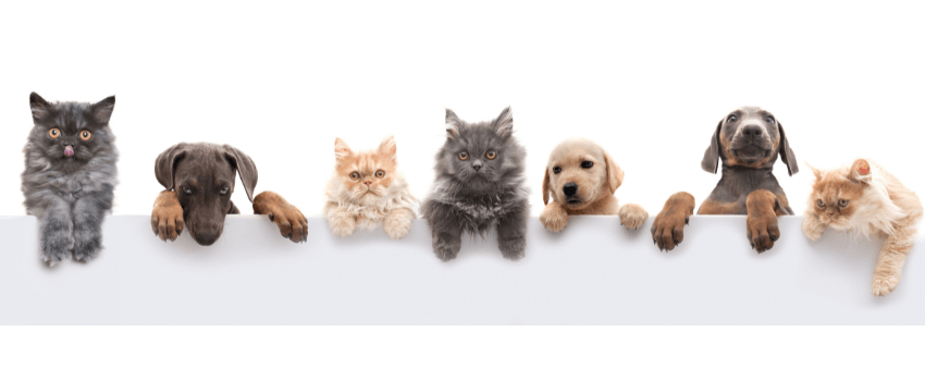 A group of friendly pets.