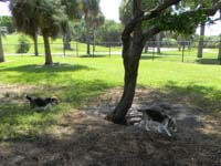 Dog Park at Sand Key Park