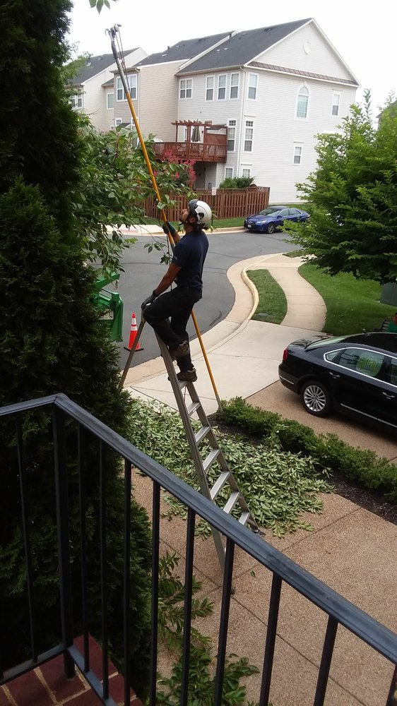 On the job Potomac Tree and Shrub Care