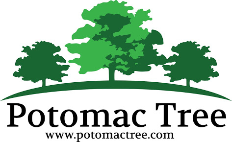 Potomac Tree and Shrub Care Logo