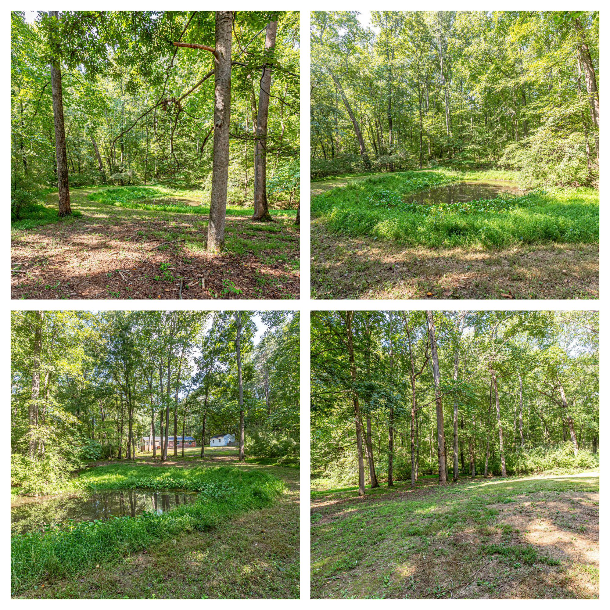 584 Aaron Mountain Rd, Castleton- Yard and Pond