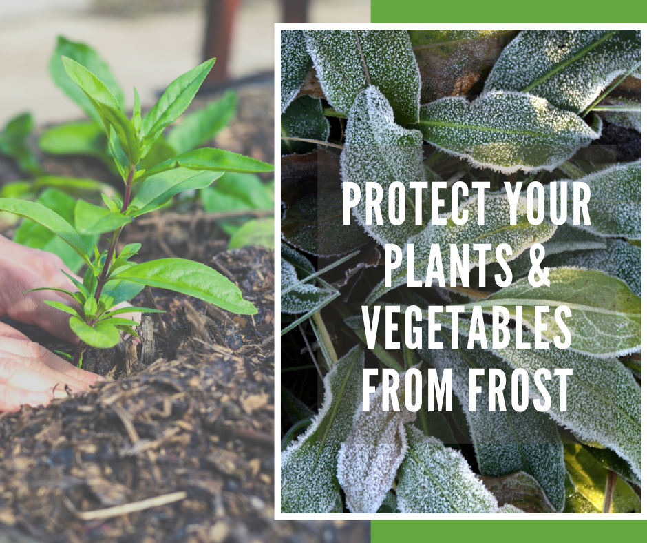 Protect plants from late frost