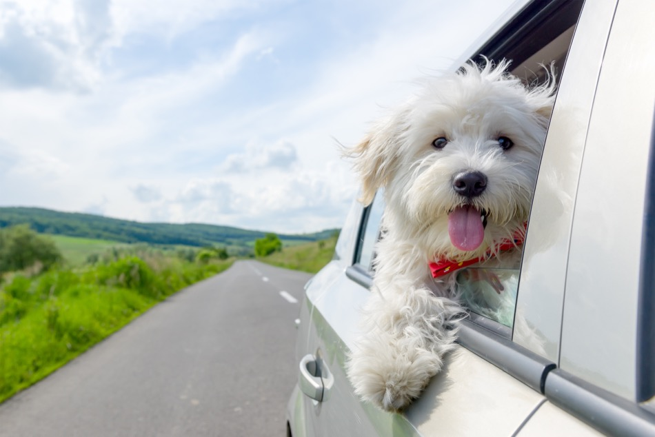 Best Places to Bring Your Dog in Alexandria, VA