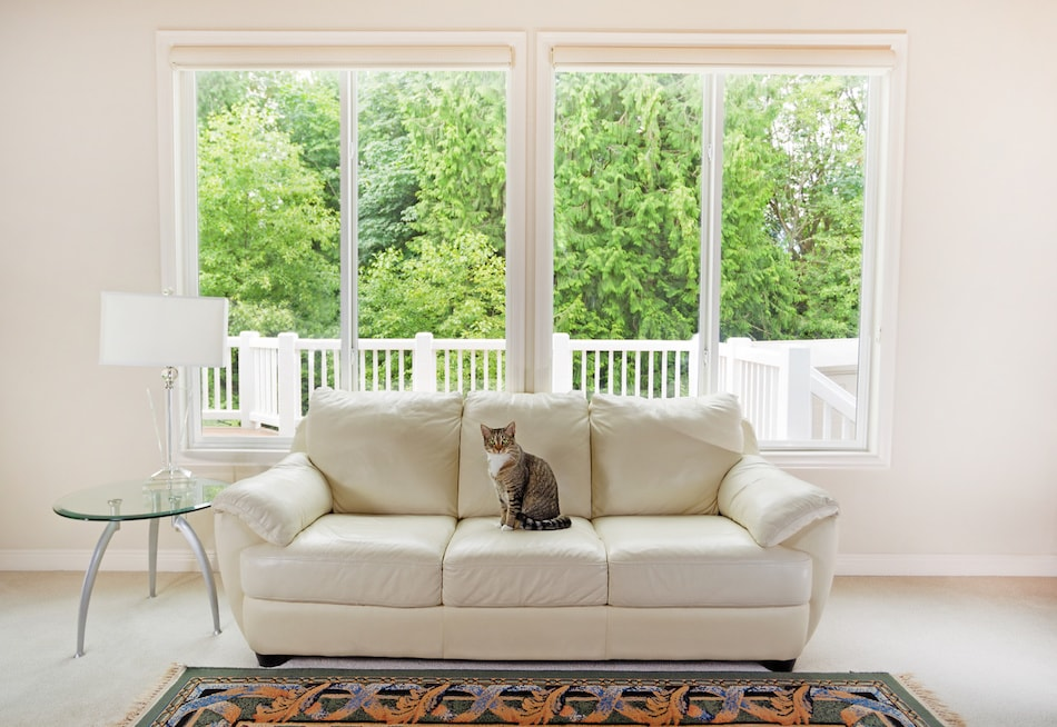 Pet Owner Home Selling