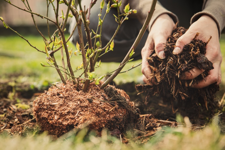 4 Traits to Avoid in Your New Tree