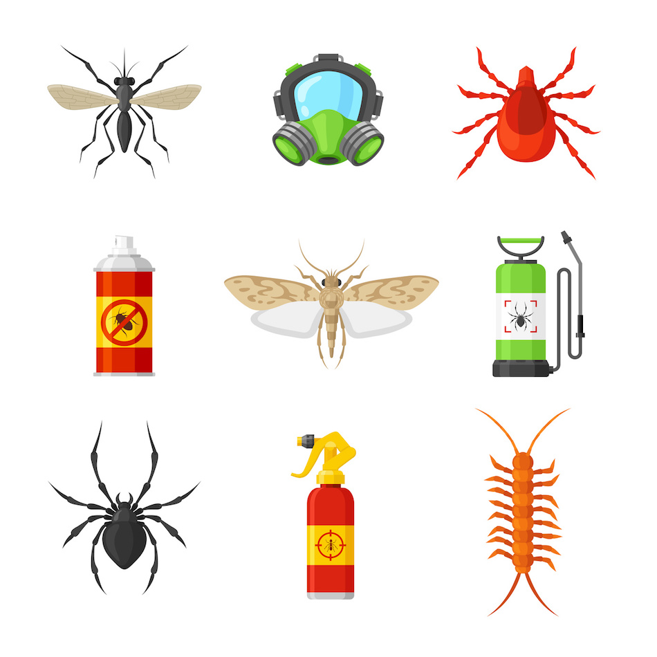 What To Do About a Pest Infestation