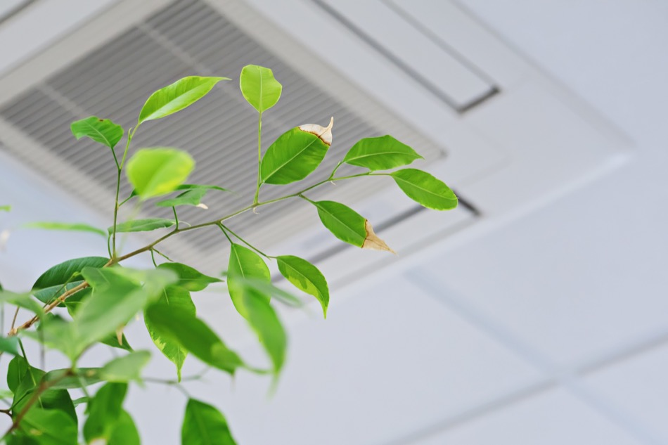 3 Ways to Improve Your Home's Air Quality
