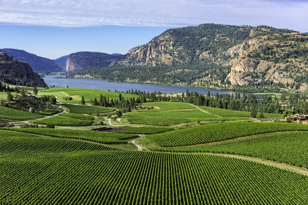 Kelowna Vineyard View
