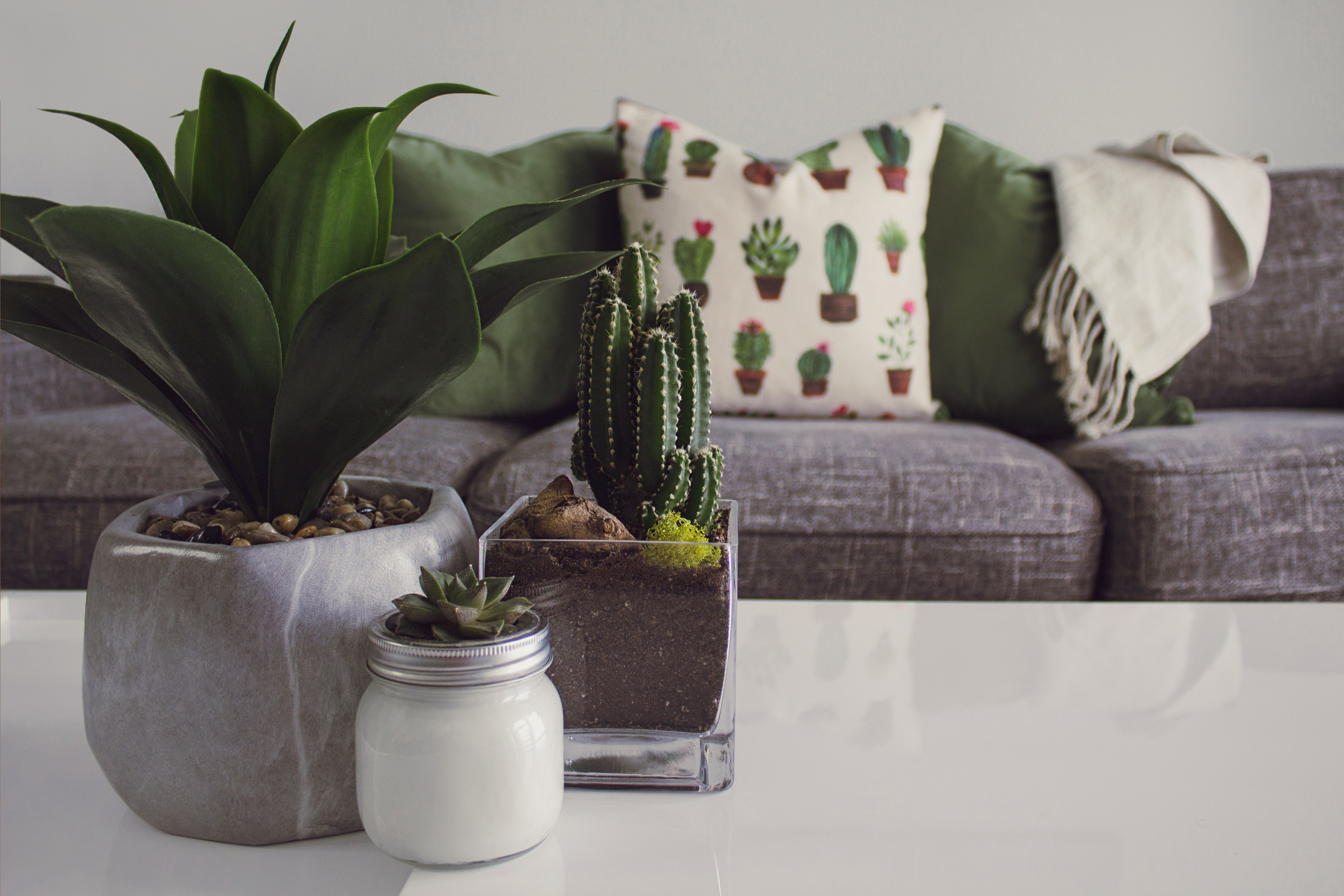 A neat room is pictured; a gray couch with a cactus print pillow in the background, and a cactus and succulents on the table in the foreground