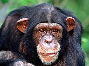 suncoast primate