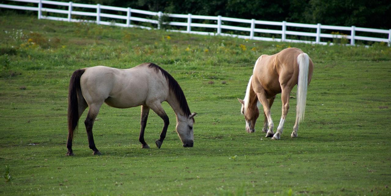 Equestrian Properties in Prosper Tx