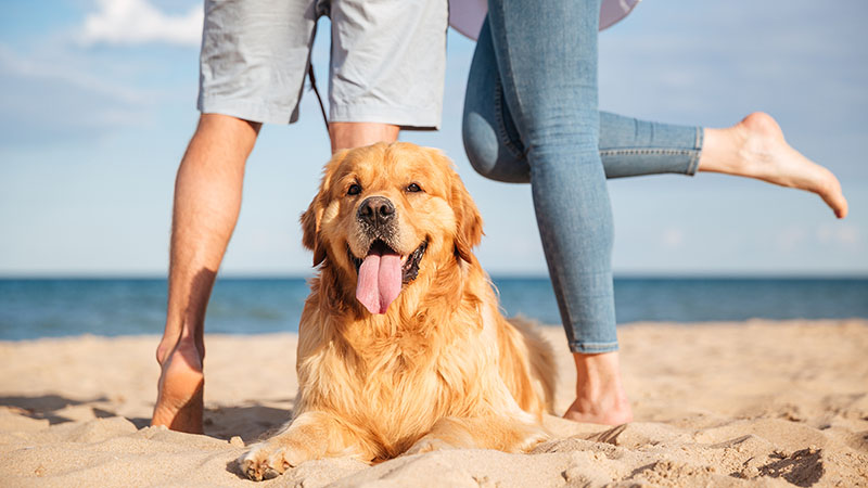 golden retreiver dog with two people happy on the beach