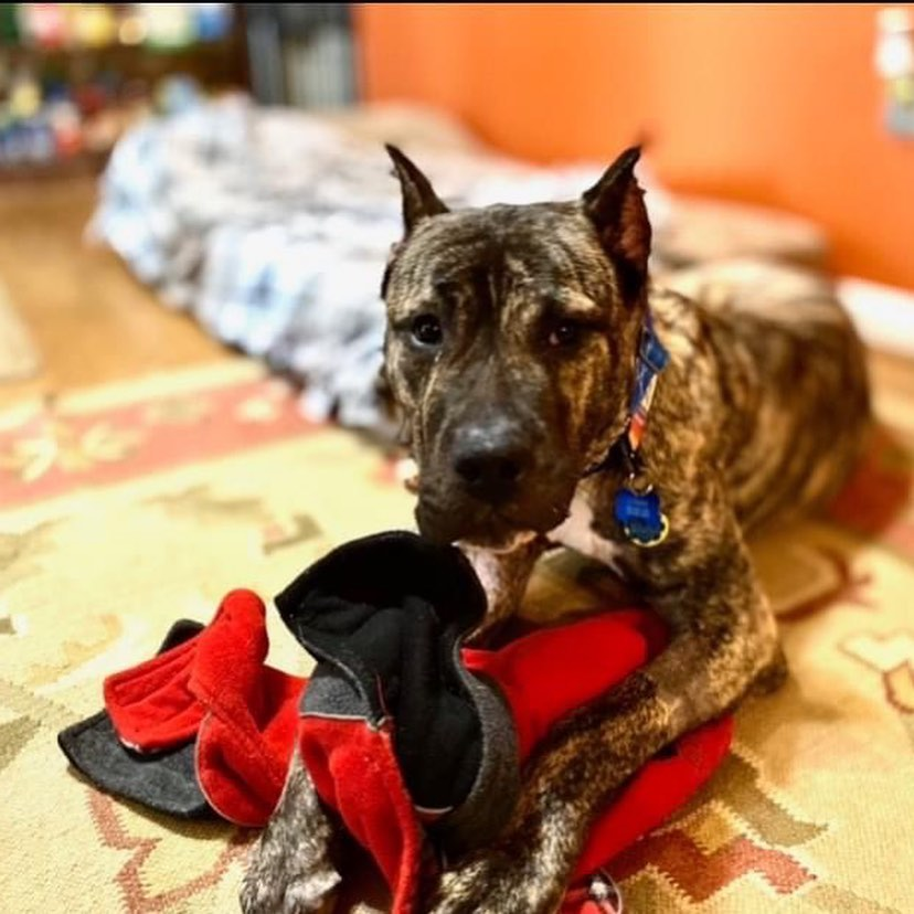 Recommendation Mondays: Kentucky Humane Society